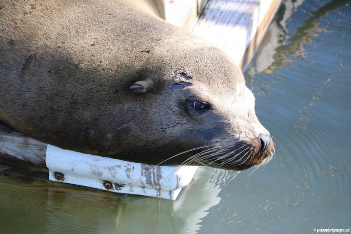 sea-otter-looking-contemplative-moss-landing-california