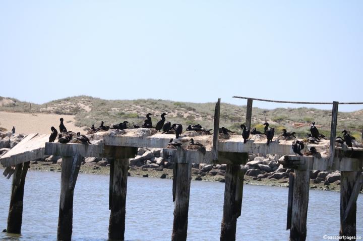 Birds-Monterey-Bay.JPG