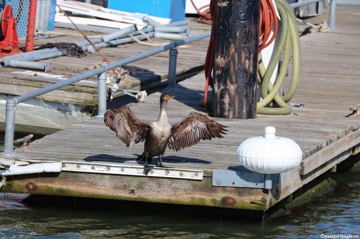 Monterey-Bay-sea-bird.JPG