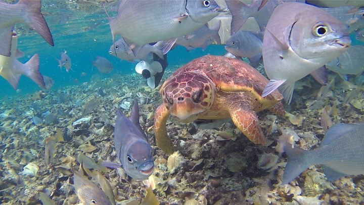 sea-turtle-hol-chan-snorkeling-belize-travel-blog-passport-pages