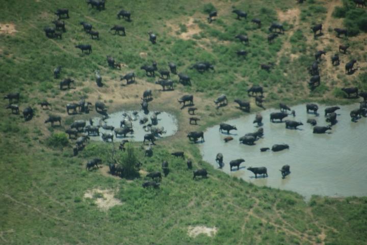 Uganda-safari-Aerolink-flight-plane-view