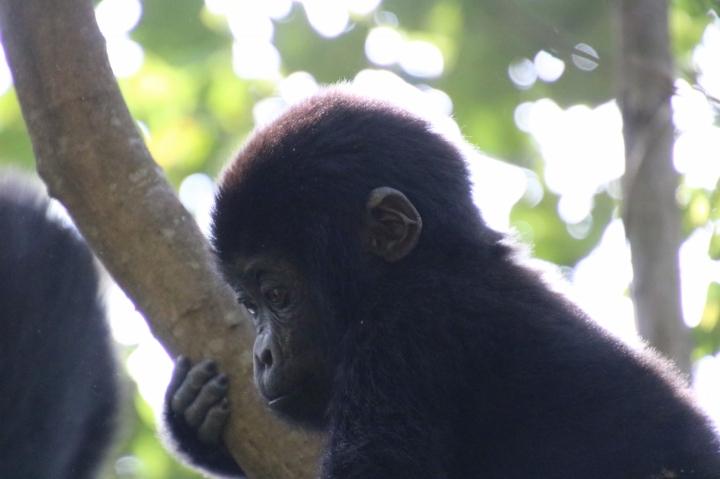 34-mountain-gorilla-trek-uganda-africa-safari-bwindi-orugozo-silverback